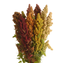 Amaranthus Mix