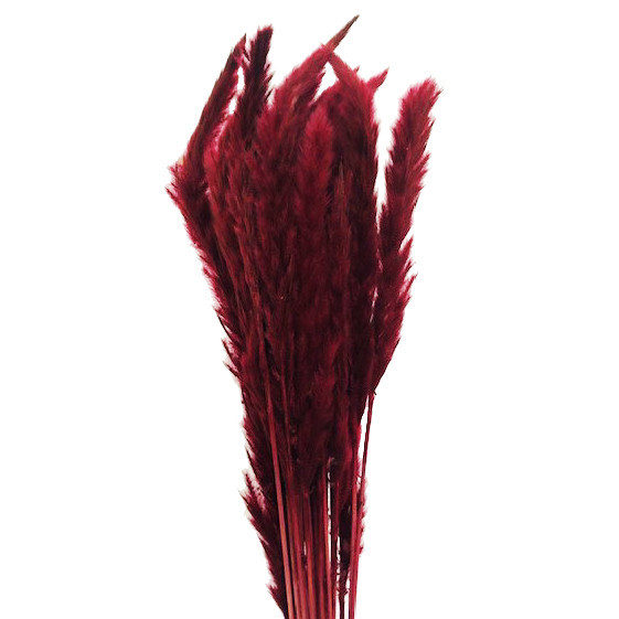 Pampas Fluffy Bordeaux 75cm