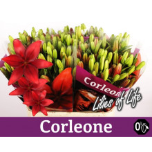 Lilja Corleone