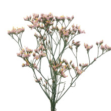 Limonium Pink Activa